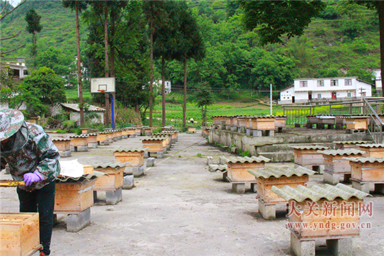 """甘海村发展养蜂产业带动群众""""甜蜜""""致富"""